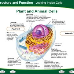 Brain Structure And Function Diagram Mitsubishi 380 Stereo Wiring Table Of Contents Discovering Cells Looking Inside - Ppt Download