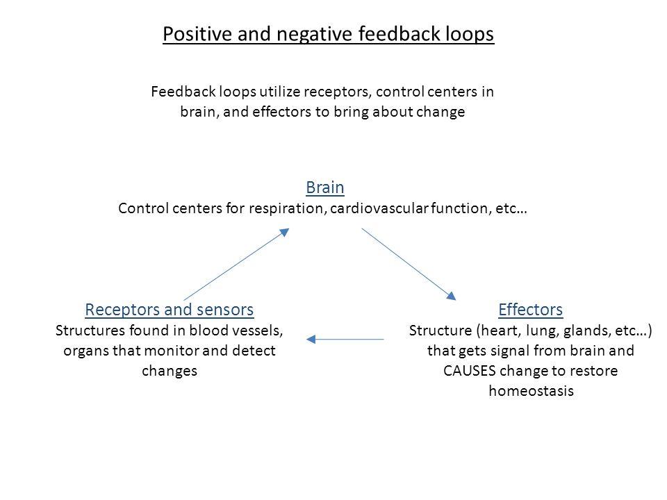 Positive And Negative Feedback Loop Anatomy