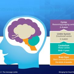 Lower Brain Diagram 2004 Saab 9 3 Audio Wiring Emotional Intelligence & Emotion Coaching - Ppt Video Online Download
