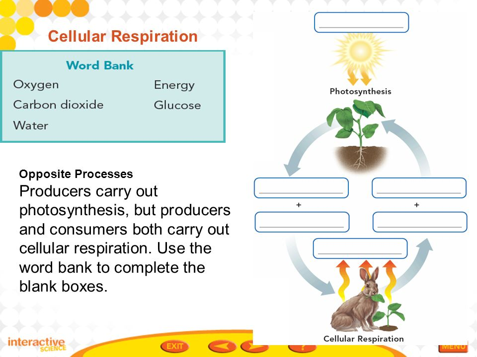 Photosynthesis cell respiration blank diagram wiring diagram database cellular respiration and photosynthesis blank diagram photosynthesis and cellular respiration venn diagram ccuart Image collections