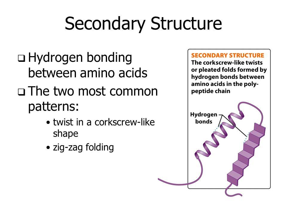 Secondary Protein Structure Bonds Hydrogen Bonds