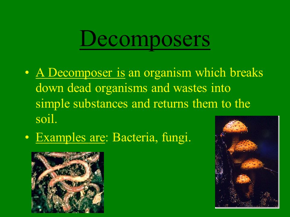 Aim How Can We Describe Ecology And The Terms Used In The