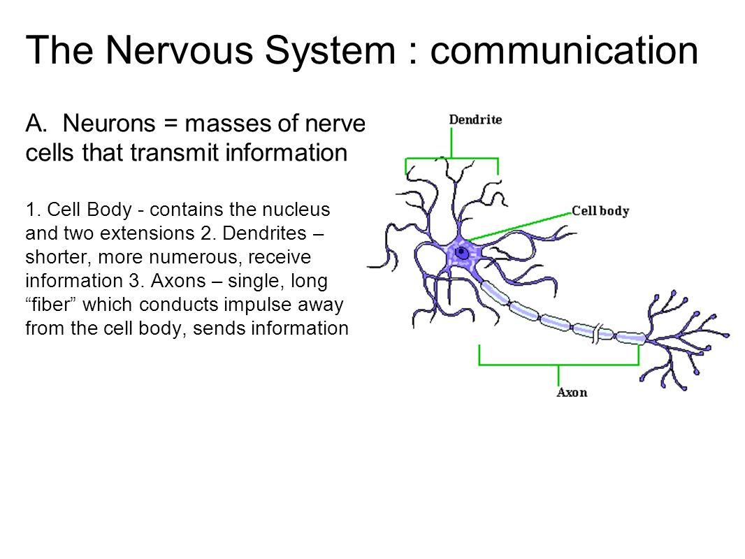 The Nervous System Communication