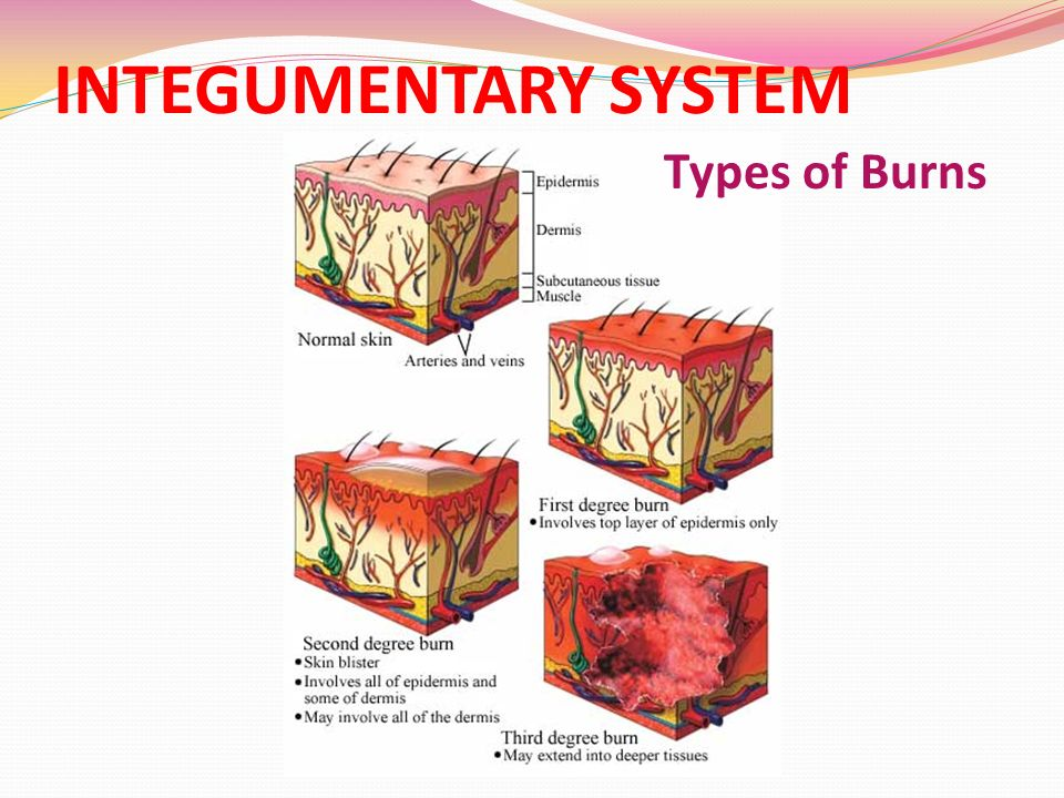 BODY SYSTEMS Ppt Video Online Download