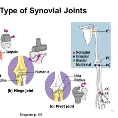 Pivot Joint Diagram 10base T Wiring The Skeletal System Chapter Ppt Video Online Download