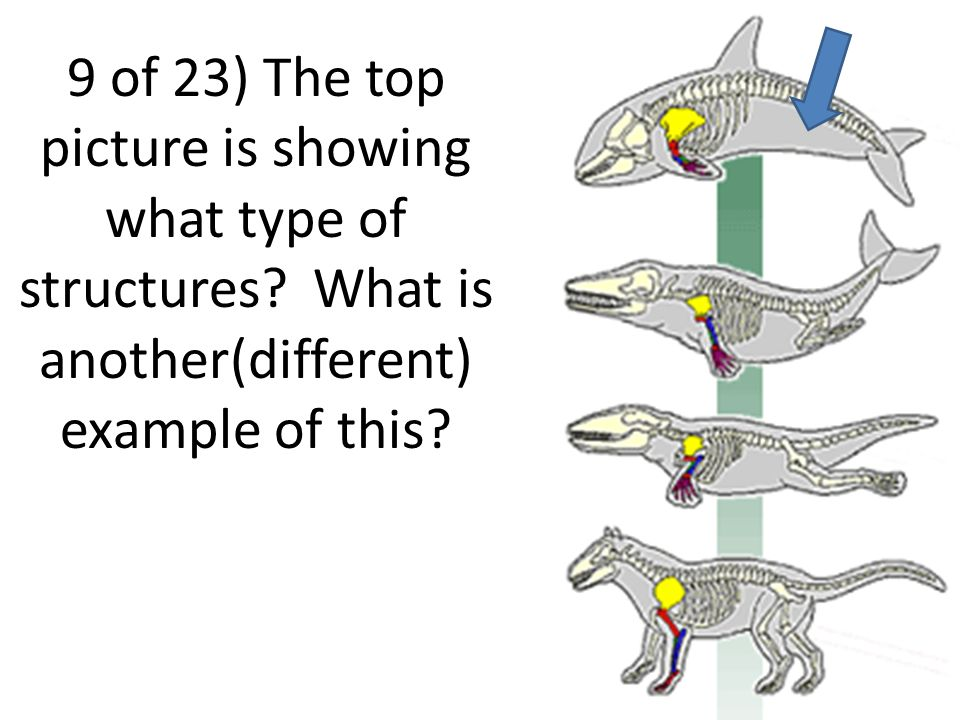 Evolution Review Game Answer each question by writing your