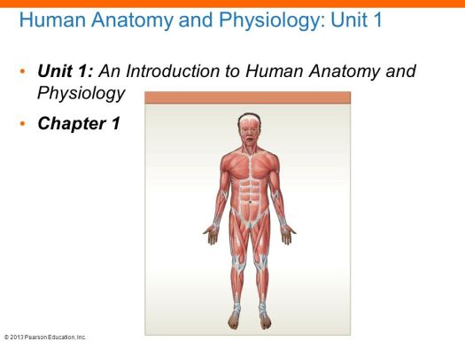 Introduction To The Human Body Essentials Of Anatomy And Physiology ...
