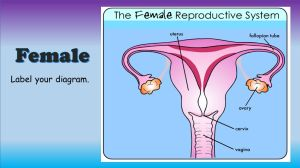 Reproductive System Make sure to pick up the CORRECT