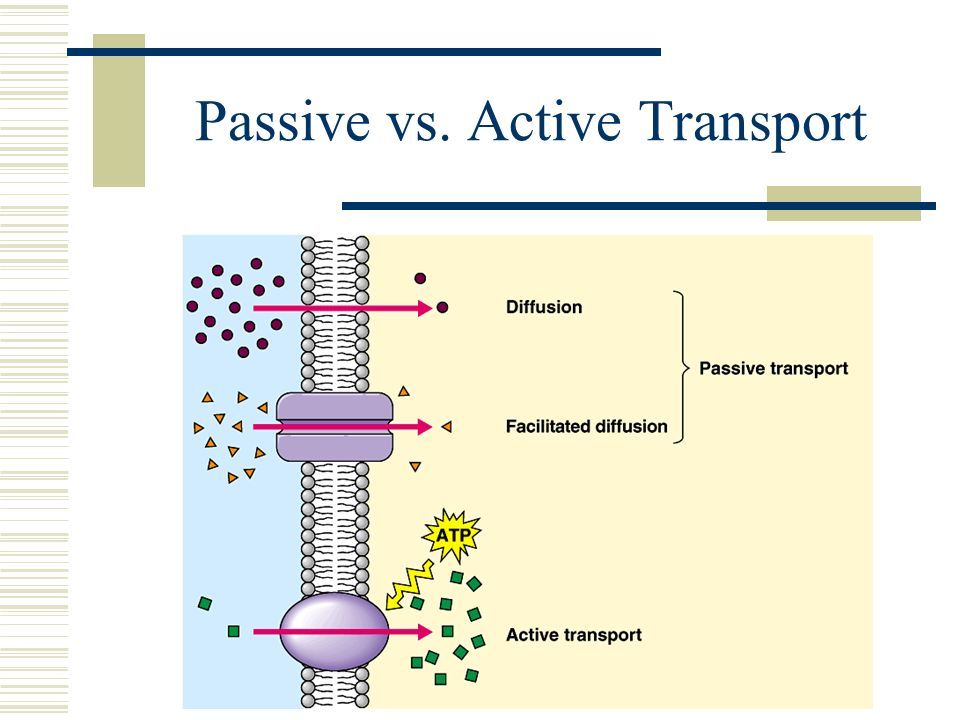 Active And Passive Transport Venn Diagram Definition Types Examples