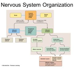 Human Brain Diagram Limbic System Leeson 10 Hp Motor Wiring The Central Nervous - Ppt Download