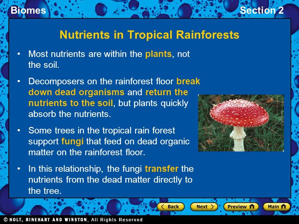 Rain Forest Nutrients