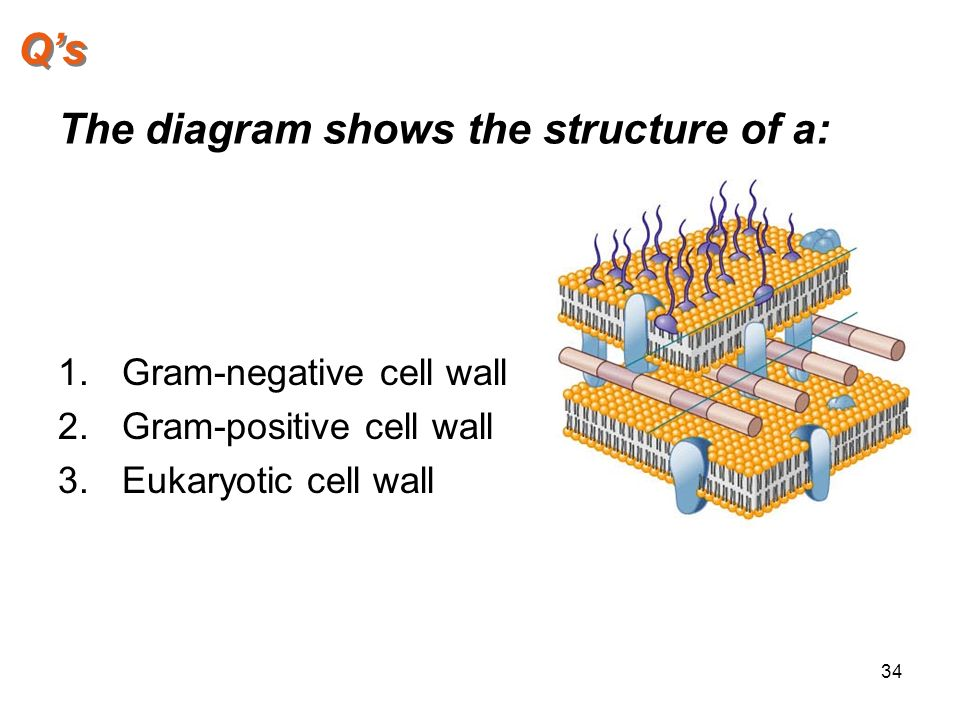 gram negative cell wall diagram t1 crossover cable relationships between bacteria and clinical features of disease - ppt video online download