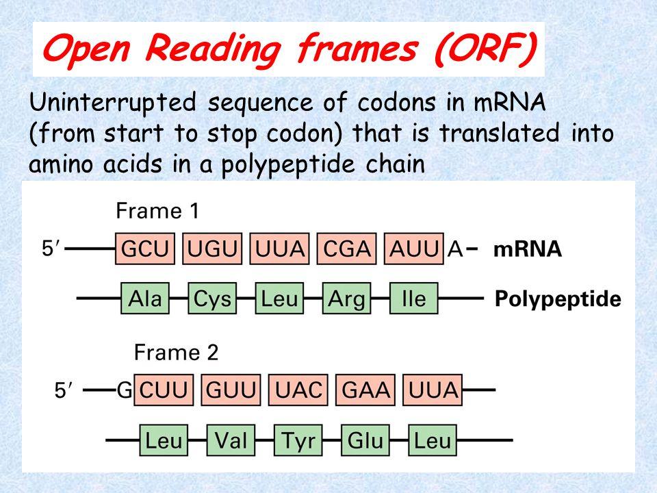 Open Reading Frame Orf Definition | pixels1st.com