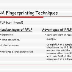 Dna Fingerprinting Diagram 2003 Mitsubishi Eclipse Gt Wiring Fingerprinting. - Ppt Download
