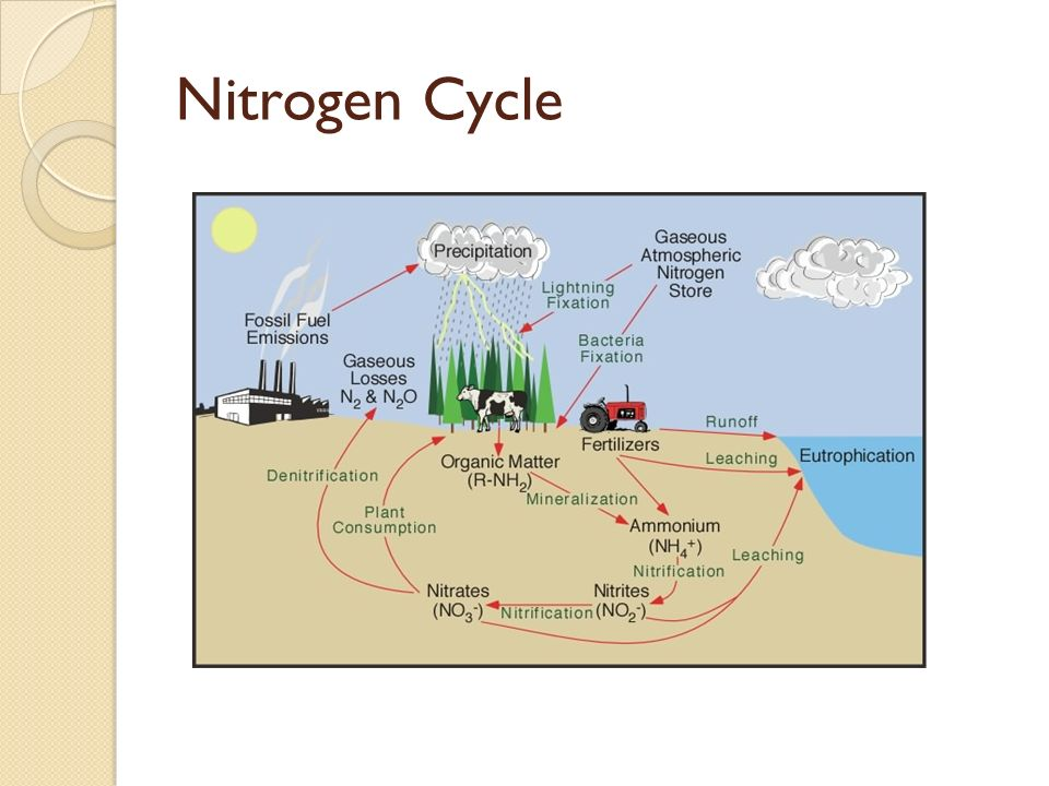 energy level diagram for nitrogen dell xps 410 motherboard ecology chapters study of the interactions between organisms & living non-living ...