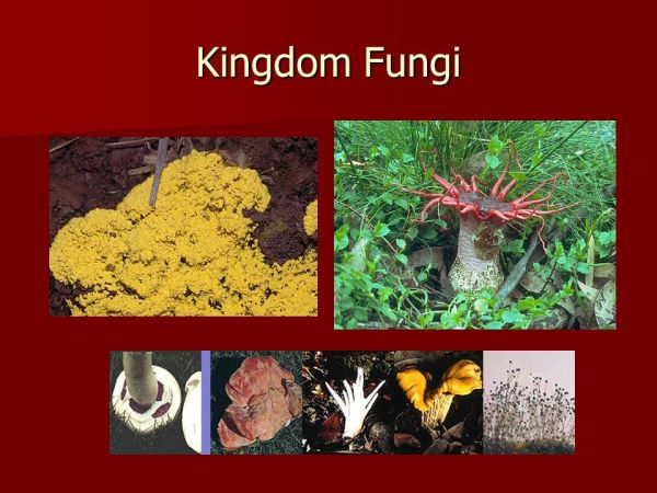 Classifying Organisms ppt video online download