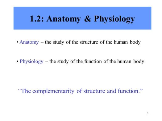 Chapter 1 Introduction To Human Anatomy And Physiology Ppt