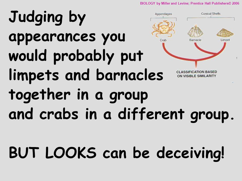 Classification of Living Things Chapter ppt video online