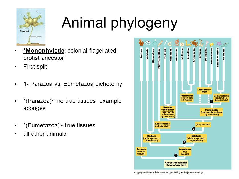 Animal And Protist Diagram