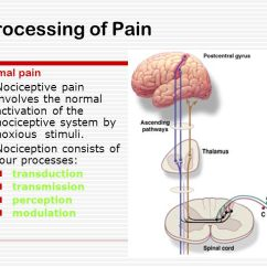 Brain Structure And Function Diagram Ford 6 0 Diesel Engine Pathophysiology Of Pain - Ppt Download