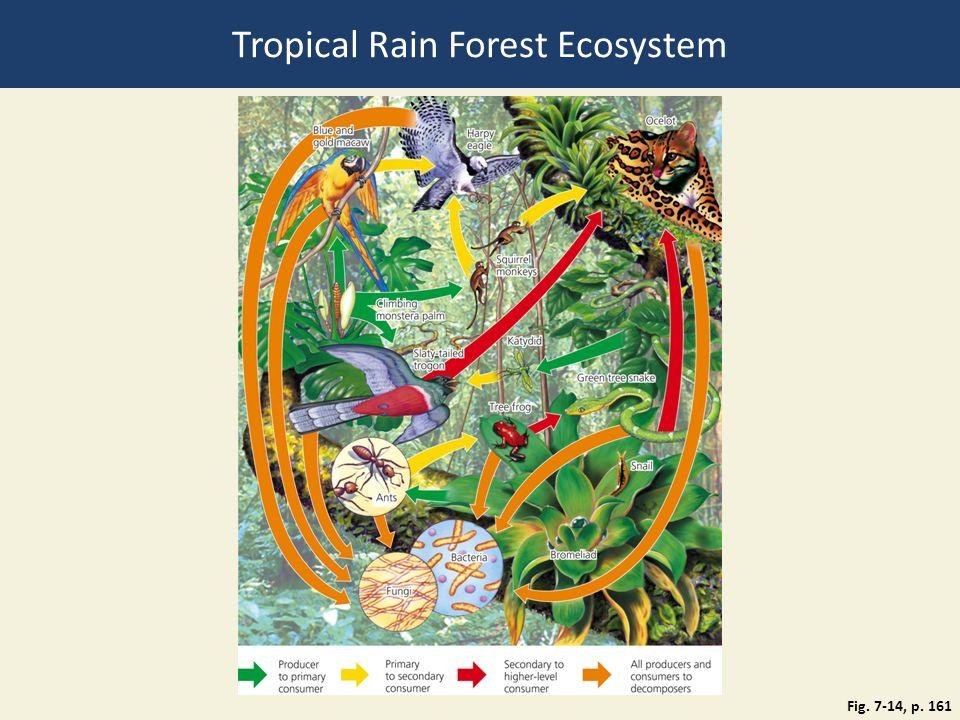 diagram of a tropical forest 7 million volt stun gun ecosystem pics download