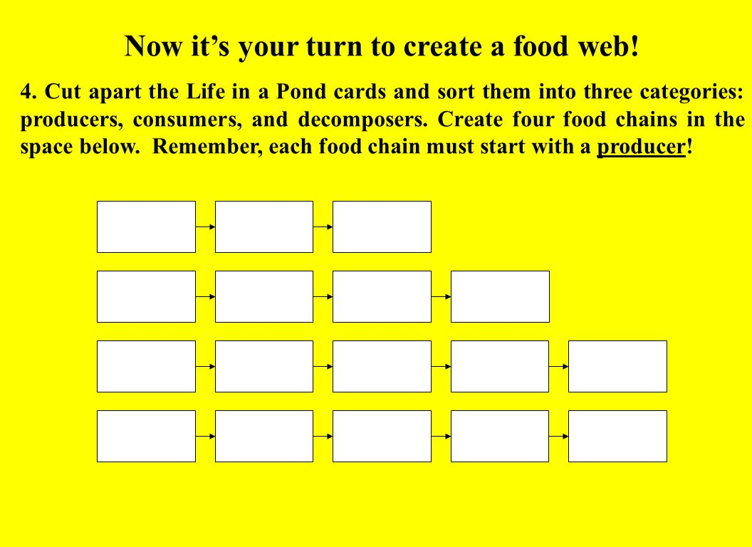 how to create a food web diagram avital 4x03 remote start wiring worksheet answers grass fedjp