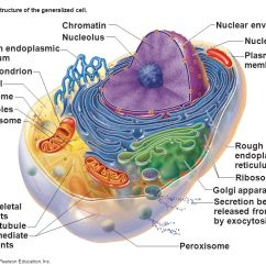 Diagram Of Fluid Mosaic Model Cell Membrane Er For Car Insurance Company Chapter 3: Cells (the Living Units). - Ppt Video Online Download