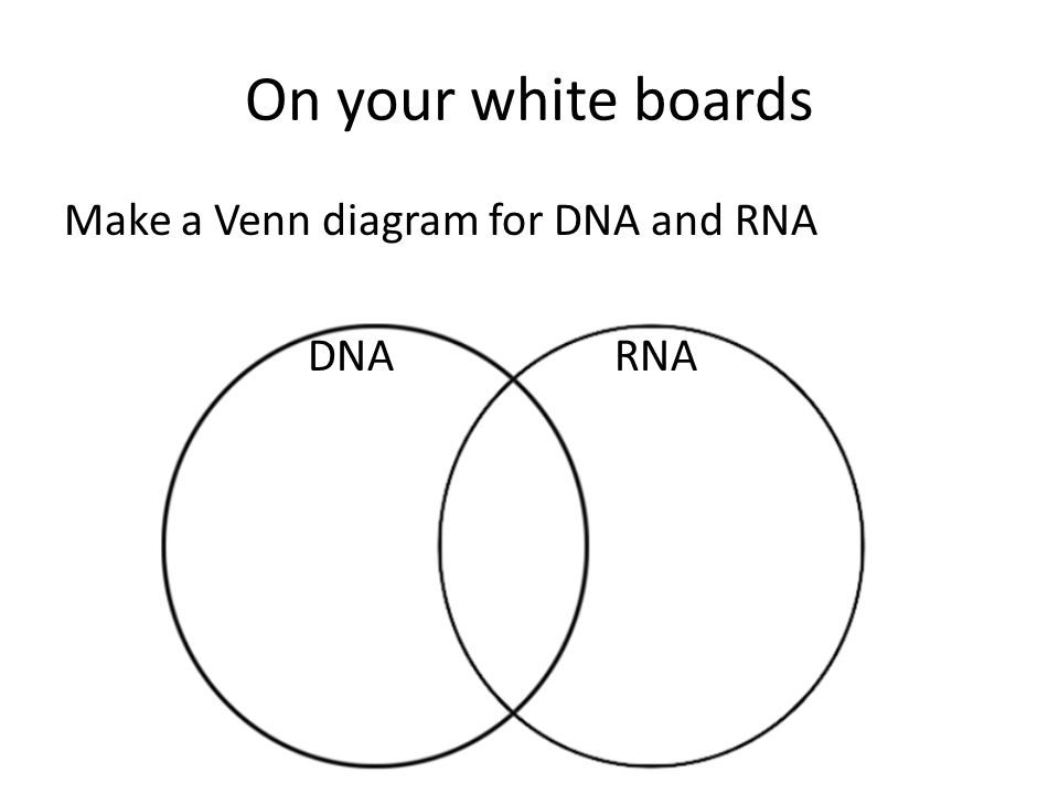 venn diagram comparing dna and rna harvard food plate wiring diagrams difference between isla nuevodiario co mitosis meiosis compare