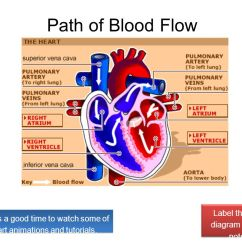 3 Chambered Heart Diagram Bmw E30 Ecu Wiring How Many Chambers Does The Have Ppt Download