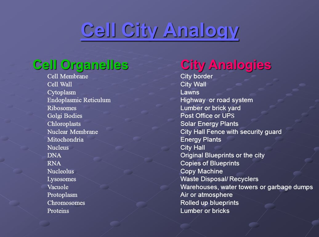 Worksheet Cell Cityogy Worksheet Worksheet Fun