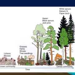 Pond Ecosystem Diagram Arctic Spa Heater Wiring Ecology Topics: Biomes And Succession Niche Energy Flow Adaptations - Ppt Video Online Download