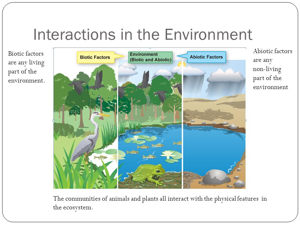 Populations & Communities Interactions With The