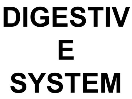 Chapter 23 Anatomy of the Digestive System