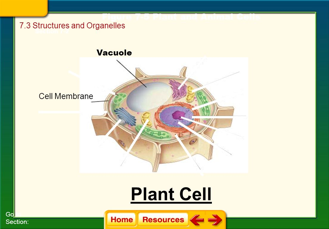 plant cell diagram only obd2a to obd1 distributor wiring 7 3  structures and organelles ppt video online download