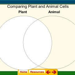 Plant And Animal Cell Diagram Quiz Ge Electric Dryer Wiring 7 3  Structures Organelles Ppt Video Online Download