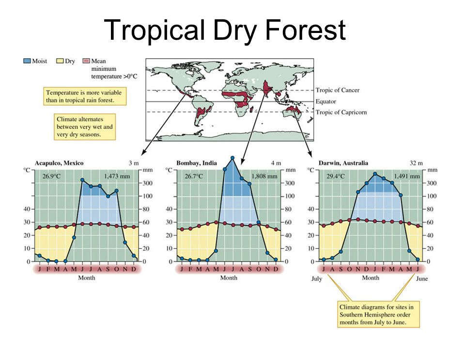 diagram of a tropical forest 2008 chrysler sebring wiring lecture 6– biogeography and biomes - ppt video online download