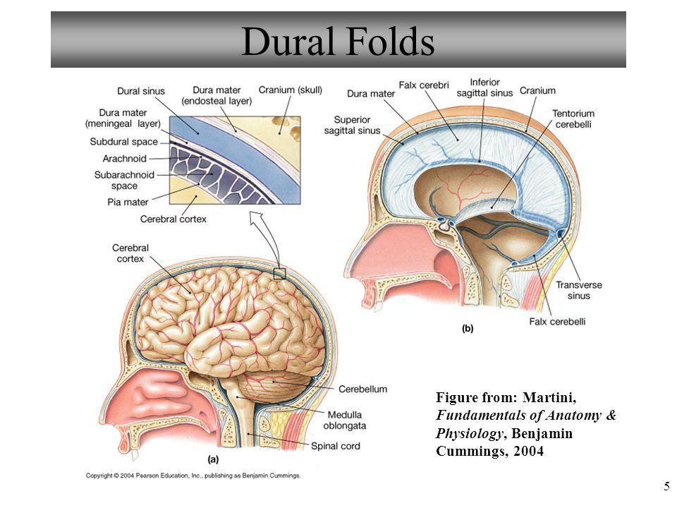 Dorable Anatomy And Physiology Martini Foto - Imágenes de Anatomía ...