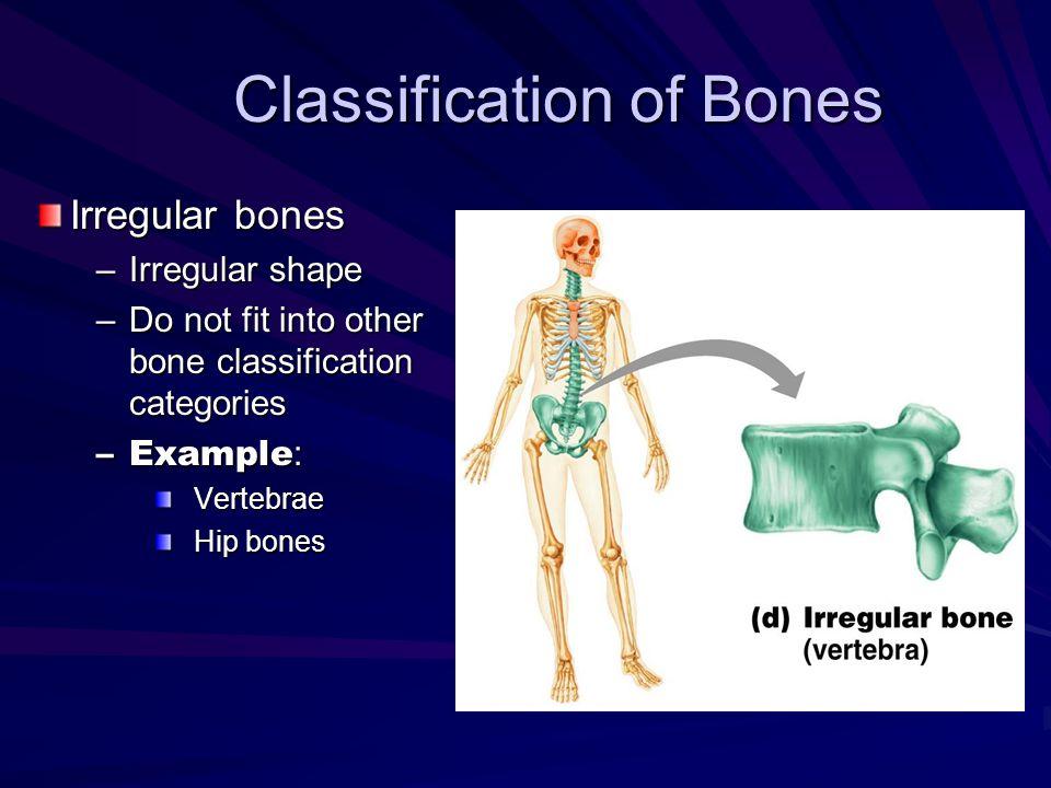 Chapter 5 – The Skeletal System Ppt Download