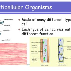 Cilia Animal Cell Diagram Wiring Switch Higher Biology Variety. - Ppt Video Online Download