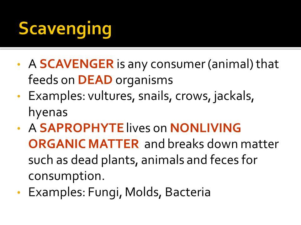 Predation Scavenging Symbiosis 3 Ppt Video Online