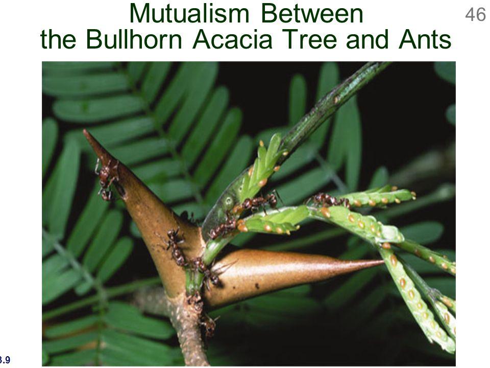 Biology 9th Ed Sylvia Mader Ppt Download