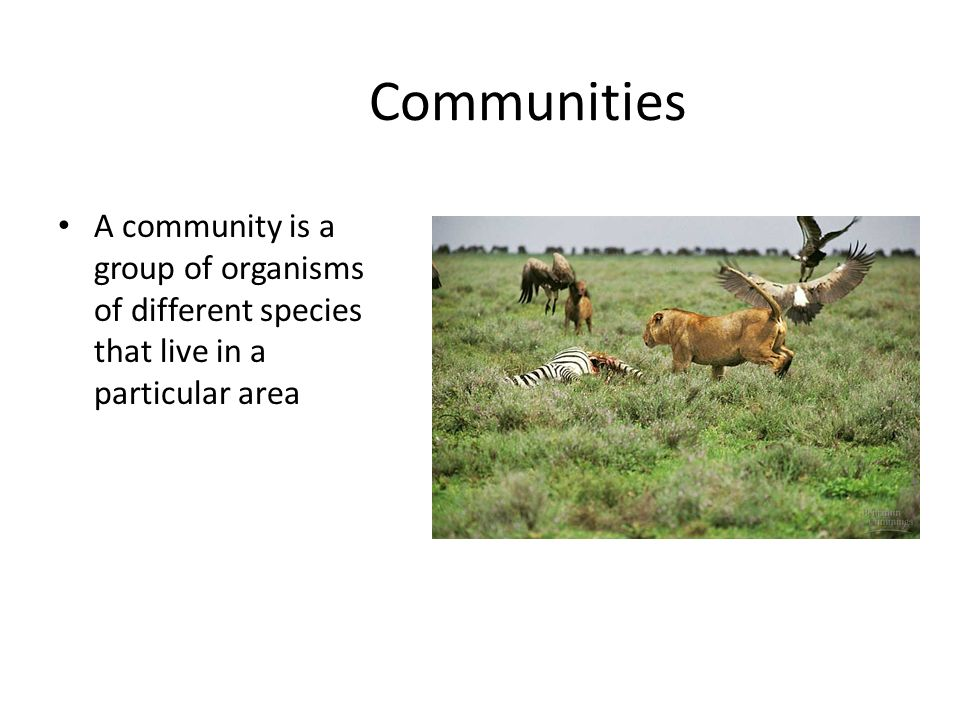 Big Idea 4 Ecology Ch 53 – Community Ecology Ppt