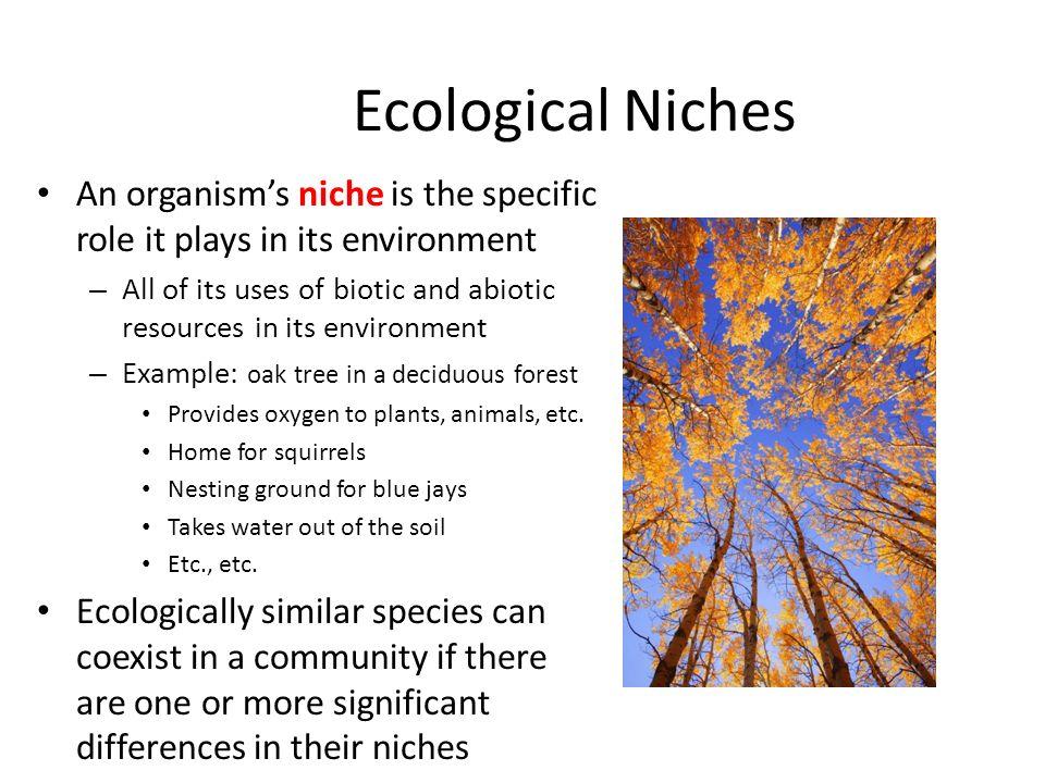 Big Idea 4 Ecology Ch 53 – Community Ecology Ppt