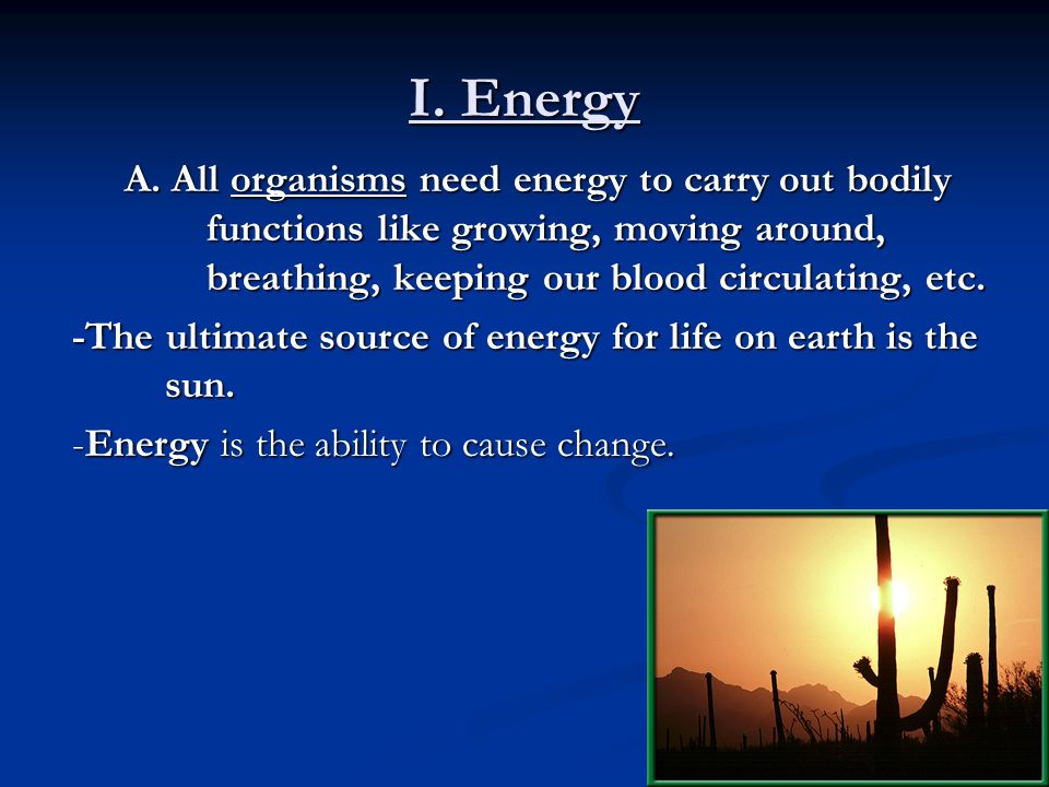 Unit 2 The Biosphere And Energy Flow Ppt Video Online