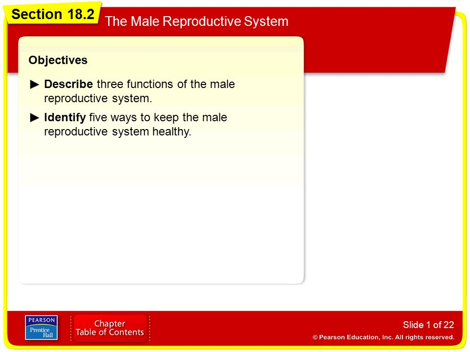 Section 182 The Male Reproductive System Objectives  Ppt Video Online Download