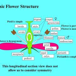 Complete Flower Diagram Harley Davidson X 90 Mini Bike Basic Structure - Ppt Video Online Download