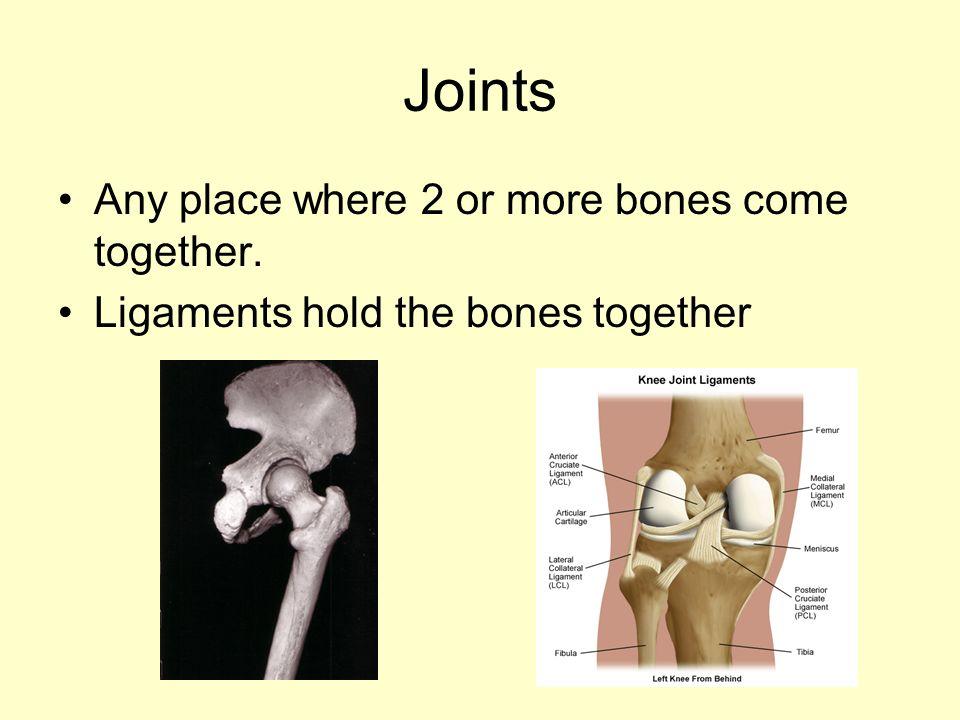 forearm bones diagram 2 wire alternator skeletal system. - ppt video online download