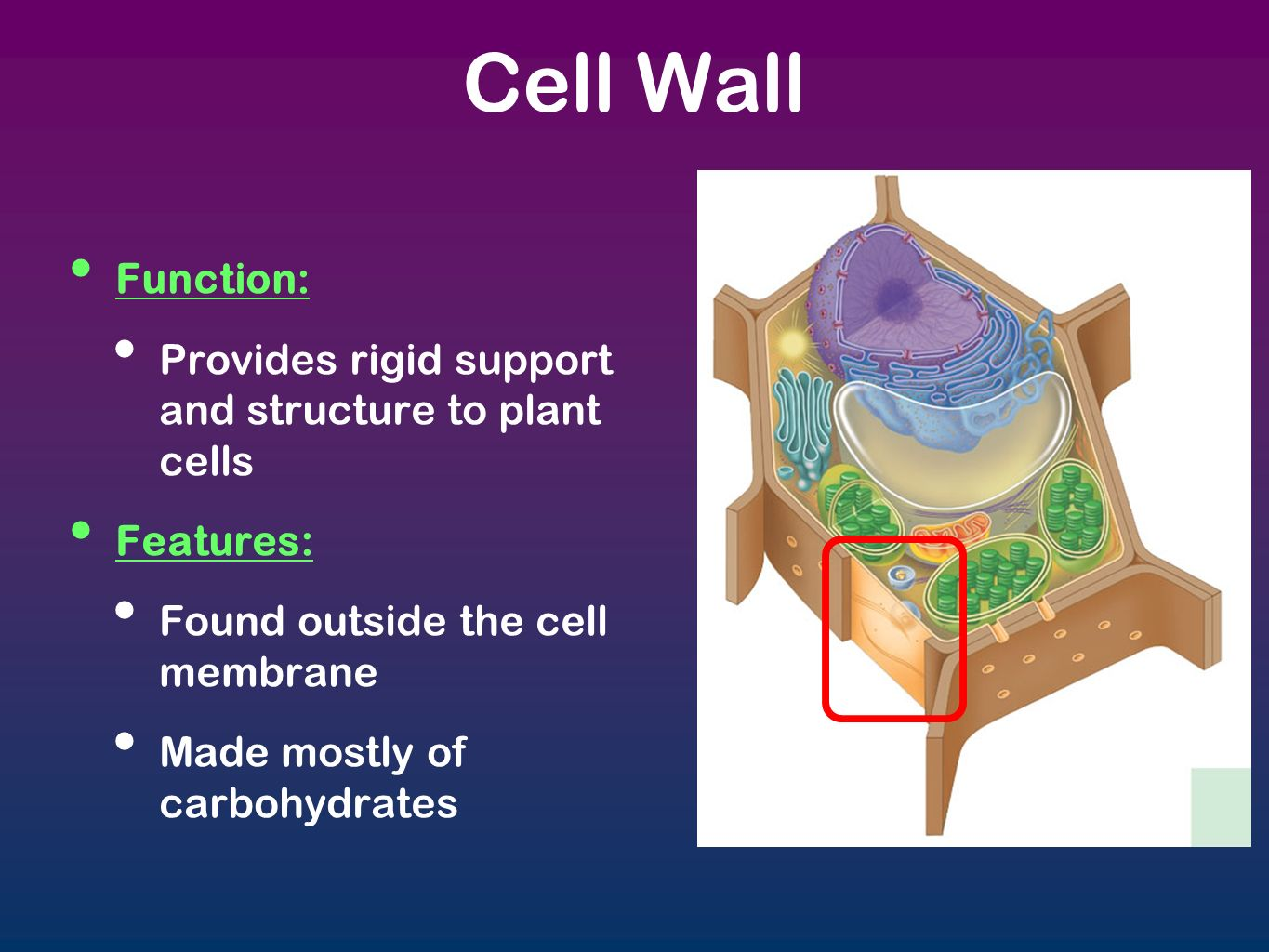cell structure and function diagram how to draw moment diagrams cells organelles ppt download