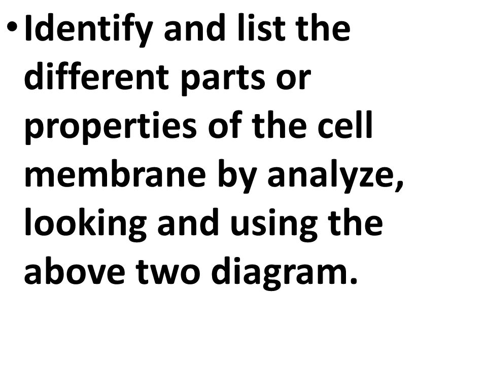 Aim: What is the anatomy and function of the cell membrane