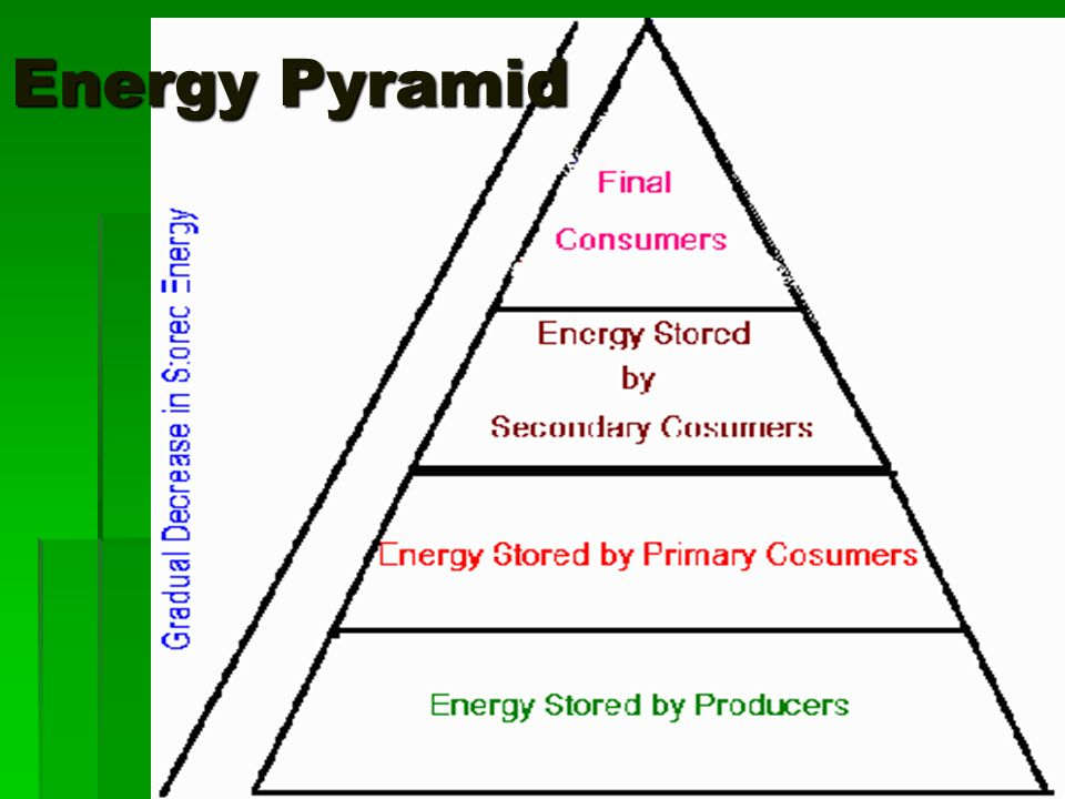 ENERGY And ECOLOGY Ecological Pyramids Ppt Download